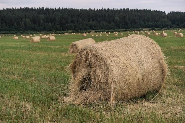 Сенокос в поле в летний день карелия область россия