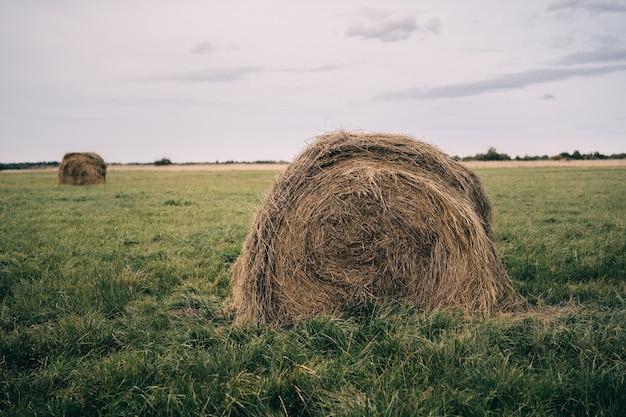 Сенокосы в поле в летний день санкт-петербургская область россия
