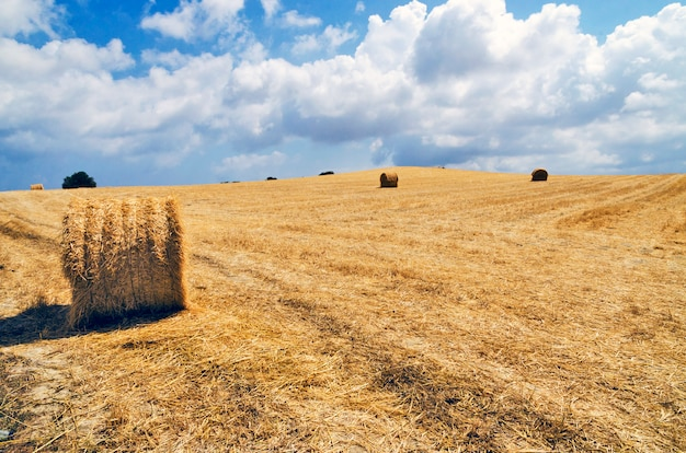 Haystack in the field in cyprus