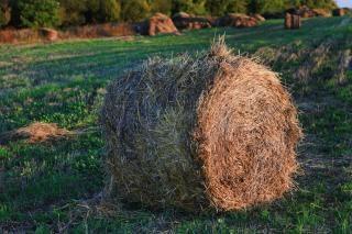 Haystack, grass, yellow