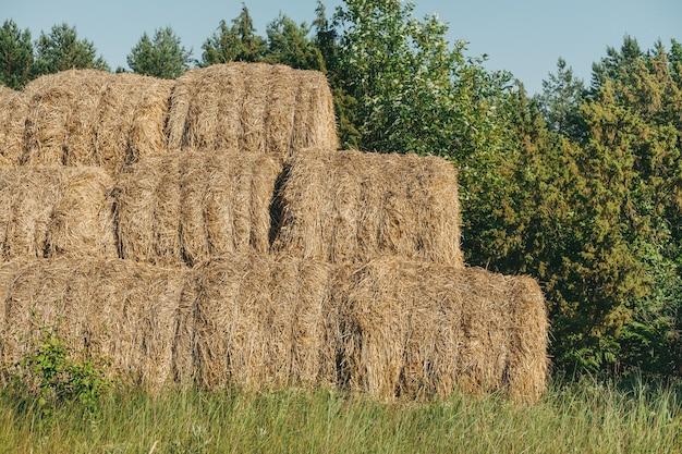 Пейзаж поля весны урожая стога сена. пейзаж поля сельского хозяйства стога сена. стога сена сложены друг на друга