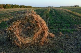 Haystack, harvest