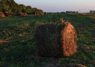 Haystackの中、haybales、干し草