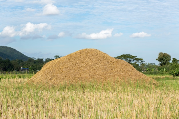 牧草地の干し草
