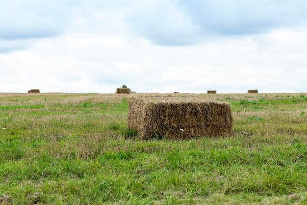 小麦収穫後の干し草の山。それらは正方形の形をしていて、クローズアップでグラフ化されています。曇り