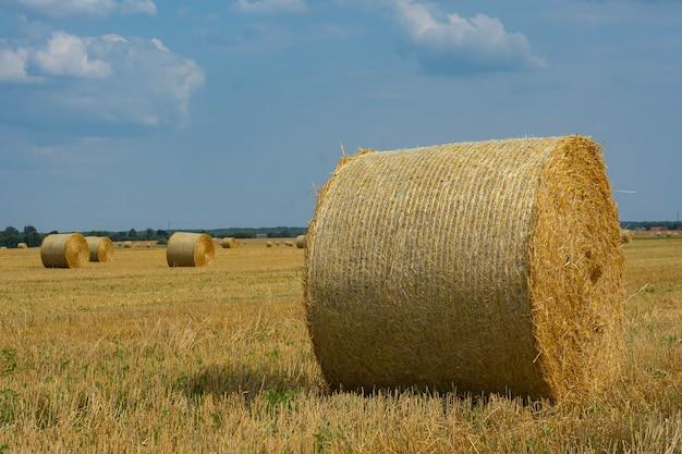 건초 더미는 구름이 있는 하늘을 배경으로 여름에 들판에서 수집됩니다.