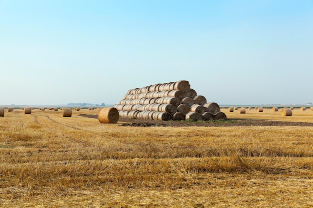 藁畑の干し草の山-穀物や小麦の収穫後に藁の干し草の山が配置される農地