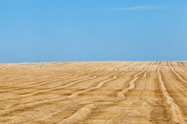 藁畑の干し草の山青空を収穫した後、藁の干し草の山が横たわる農地