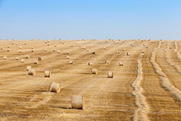 Стога сена в поле соломы сельскохозяйственное поле, на котором лежат соломы стога сена после сбора урожая голубое небо.