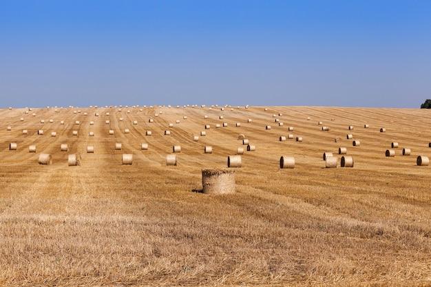 Стога сена в поле соломы стога соломы осталось после сбора урожая пшеницы малая глубина резкости