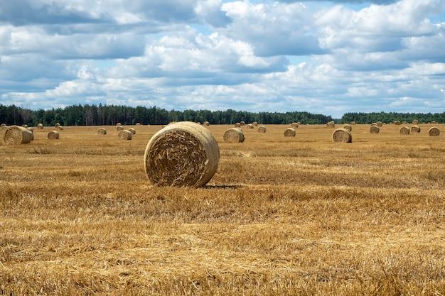 フィールド上の干し草の山、クローズアップビュー。晴れた夏の日の農地の明るい黄色と金色の干し草の山。