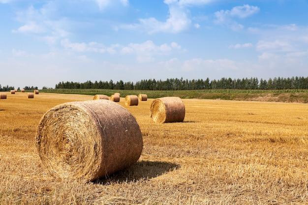 Стога сена, сложенные соломой