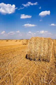 干し草の藁-収穫後に農地に横たわる干し草の藁。夏