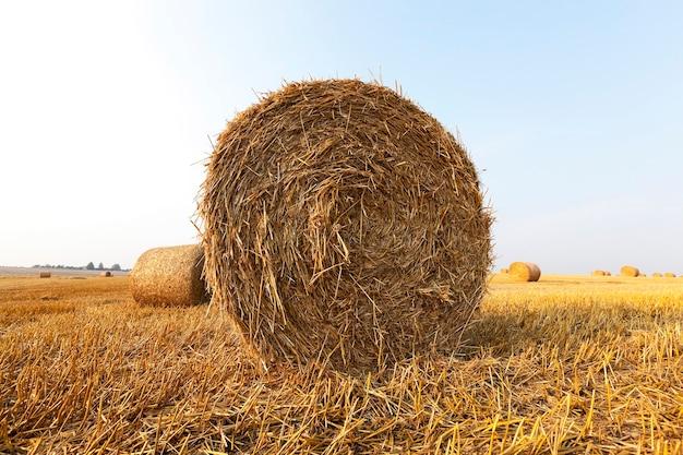Солома стога сена осталась после уборки пшеницы, малая глубина резкости