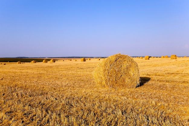 수확 후 농업 분야에 누워 건초 더미 짚. 여름