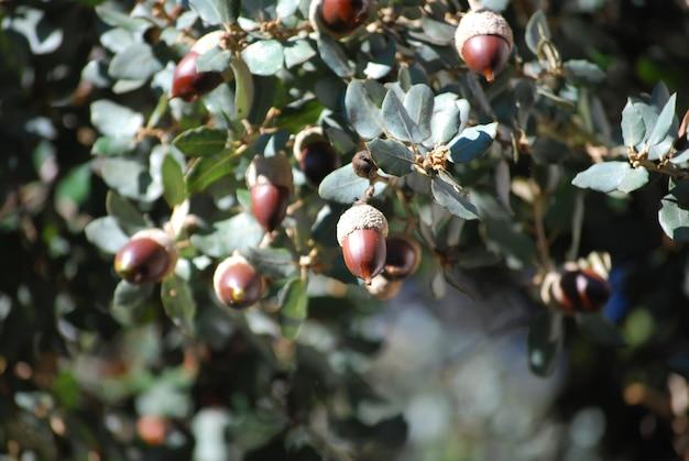 다양한 과일과 함께 헤이즐넛 부케