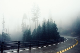 Hazy road across the forest
