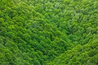 緑の葉のテクスチャhdr