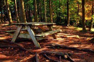森のピクニックテーブルhdr複合