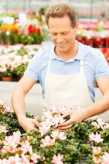 그는 자신의 일을 사랑합니다. 앞치마 차림의 잘생긴 성숙한 남자가 꽃을 정리하고 웃고 있다