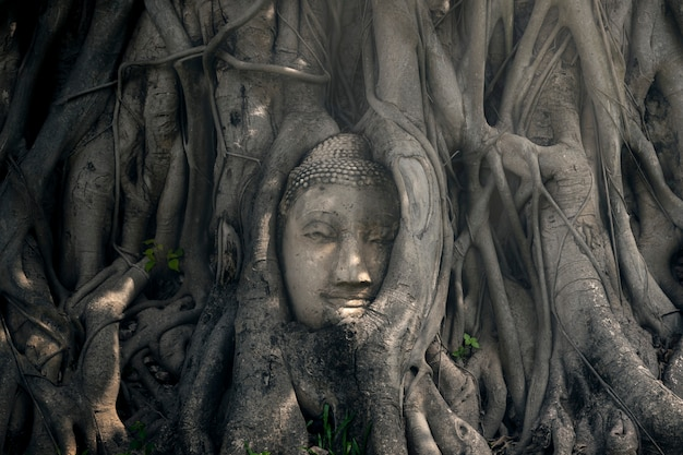 The head of the ancient buddha statue in thailand