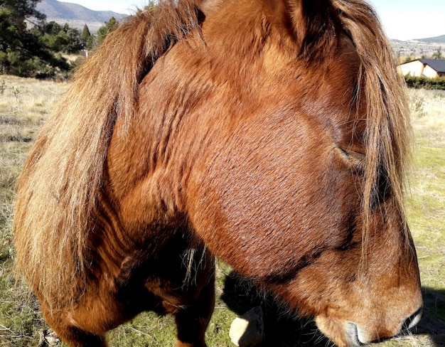 The head of a beautiful brown horse with blond hair in profile