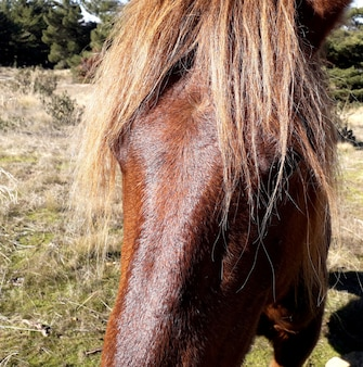 The head of a beautiful brown horse with blond hair very close
