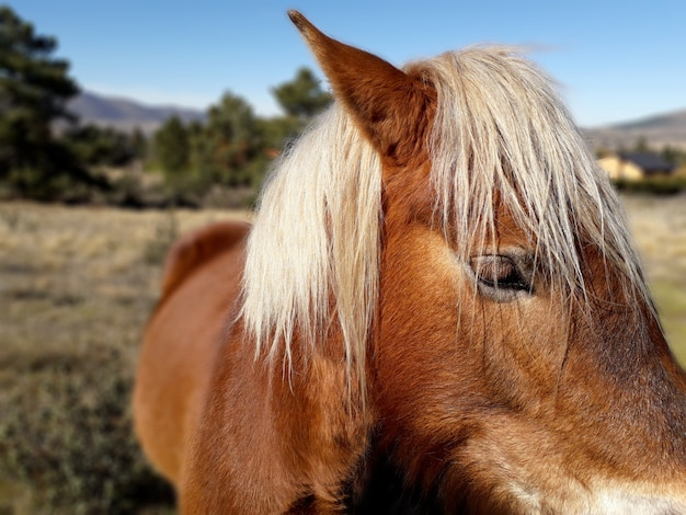 The head of a beautiful brown horse with white hair