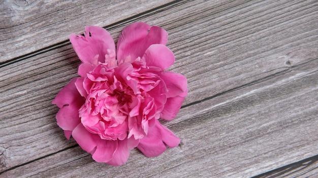 Головной букет из розовых пионов - один лежит на темной поверхности