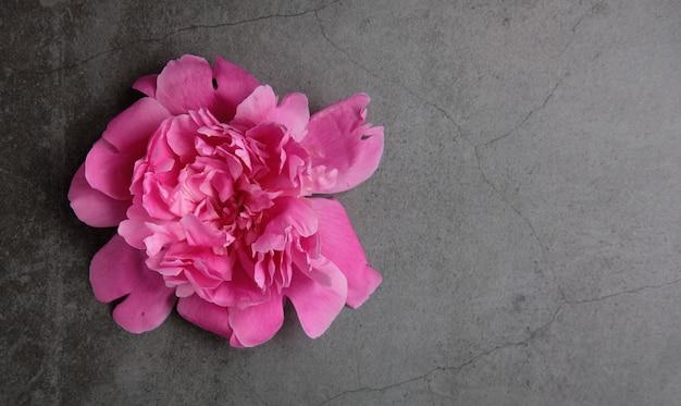Головной букет из розовых пионов - один лежит на серой поверхности
