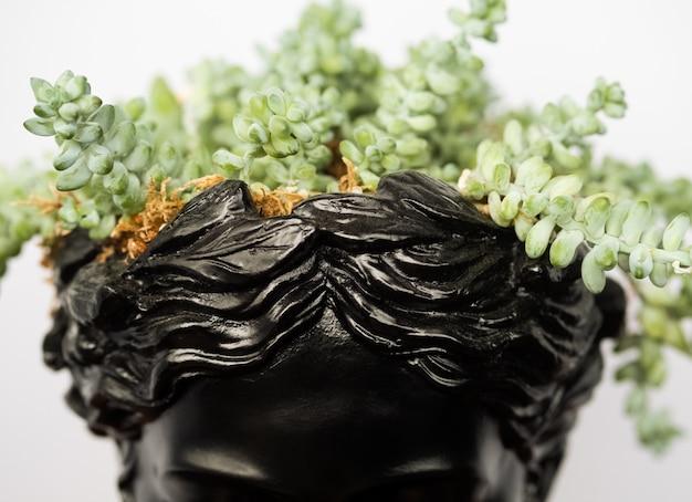 당나귀 꼬리 즙이 많은 식물을 가진 맨 위 세라믹 화분