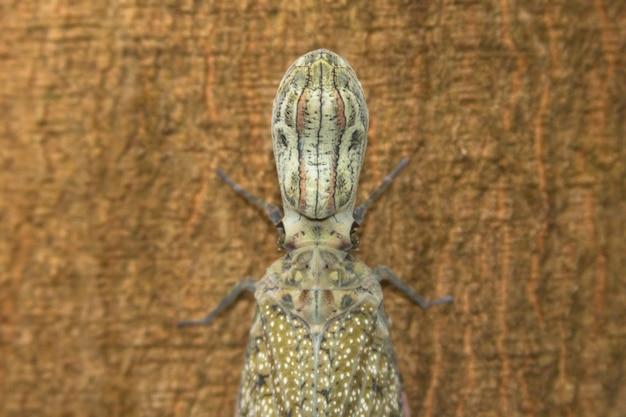 Детали головы насекомого на дереве