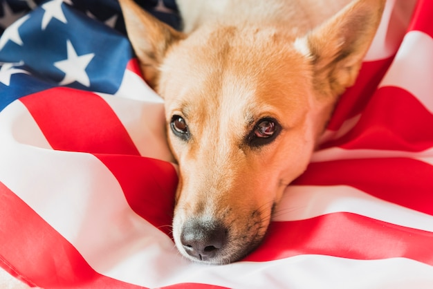 Head of dog lying on american flag