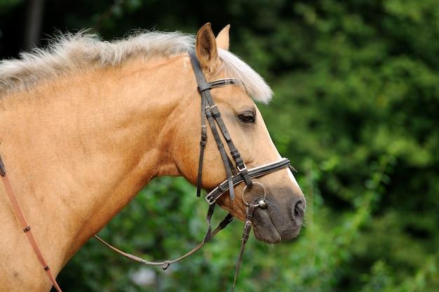 Head of horse close up.