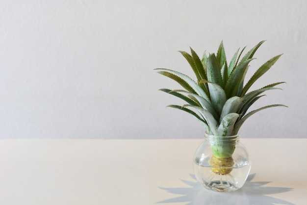 Head of mini or dwarf pineapple (bromeliad)  in transparent vase on the table