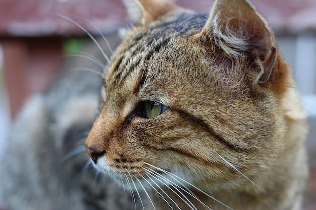 회색 고양이 클로즈업의 머리