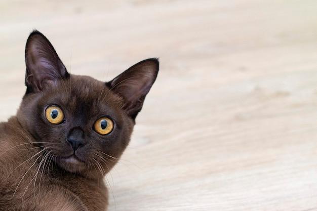 驚いた猫の頭が明るい背景にクローズアップ