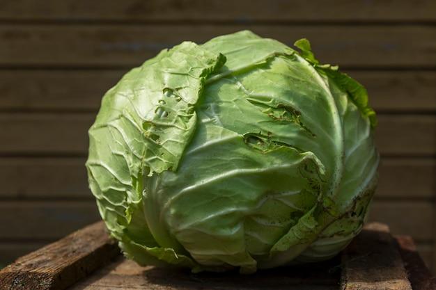 화창한 날 정원에서 양배추 머리. 새로운 수확. 건강에 좋은 음식과 비타민. 확대.
