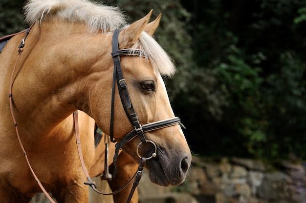 Голова лошади крупным планом.
