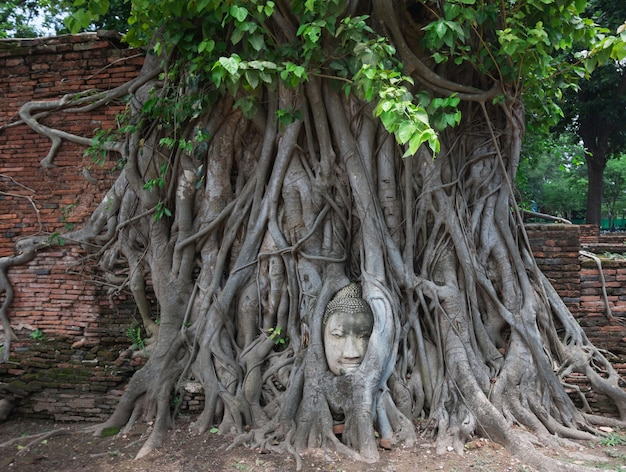 Head of sandstone buddha in the tree roots at wat mahathat, ayutthaya, th