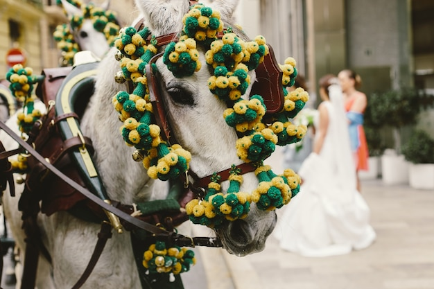 Head of spanish race horses decorated with garland