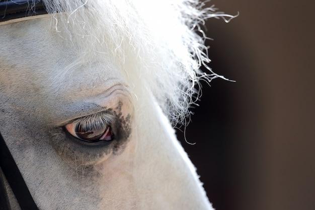 Head of white horse closeup on blurred