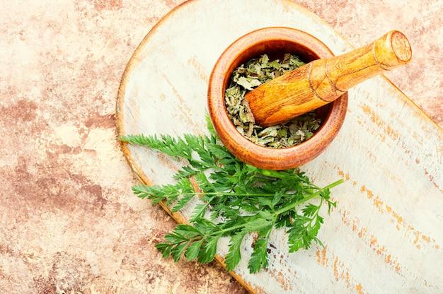 漢方薬における野生のニンジンの治癒特性。新鮮な薬用、治癒植物。