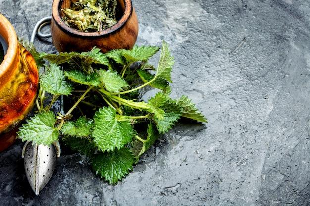 Healing tea with nettle