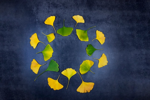Healing yellow and green ginkgo leaves for memory of longevity and health in traditional oriental medicine lie in a circle on a dark background Premium Photo