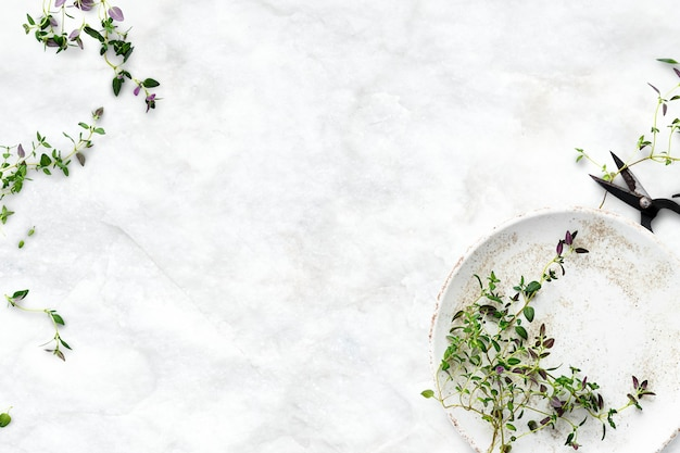 Healthy diet background with thyme leaf border