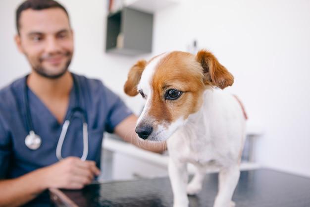 医師の検査の準備ができている健康な犬