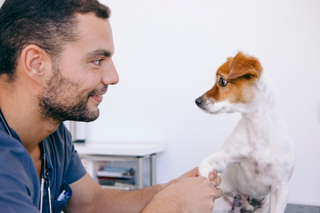 健康な犬が彼の衛生状態を大事にする