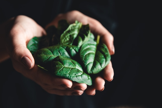 Healthy eating, dieting, vegetarian food and people concept - close up of woman hands holding spinach