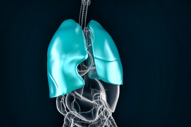 Healthy human lungs. anatomical illustration